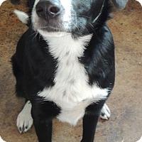 Adopt A Pet :: Jojo - House Springs, MO