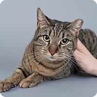 Adopt A Pet :: Jane - Wilmington, DE