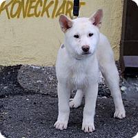 Adopt A Pet :: Suma - Los Angeles, CA