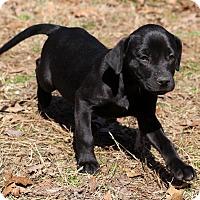 Adopt A Pet :: Kinley - Glastonbury, CT