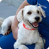Adopt A Pet :: Doyle - Mission Viejo, CA