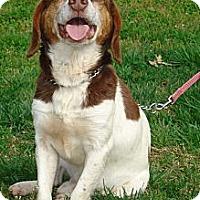 Adopt A Pet :: COWBOY - ROCKMART, GA