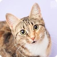 Adopt A Pet :: Em - Vancouver, BC