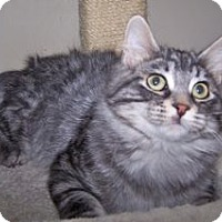 Adopt A Pet :: K-Chippewa2-Maverick - Colorado Springs, CO