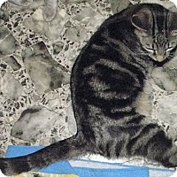 Adopt A Pet :: Sunni - Vansant, VA