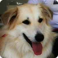 Adopt A Pet :: Maggie - Kyle, TX