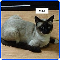 Adopt A Pet :: Moe - Miami, FL