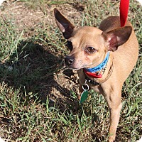 Adopt A Pet :: Peewee - Waldorf, MD