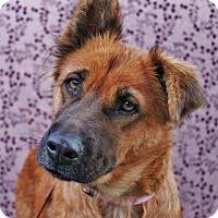 Adopt A Pet :: Gaviota - Inglewood, CA