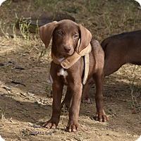Adopt A Pet :: jaden - Charlemont, MA