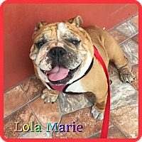 Adopt A Pet :: Lola Marie - Hollywood, FL