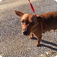 Adopt A Pet :: Lady - Hohenwald, TN