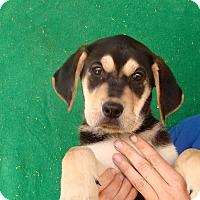 Adopt A Pet :: Dilly - Oviedo, FL