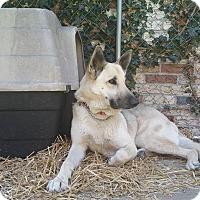 Adopt A Pet :: Cheyenne - Baltimore, MD