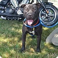 Adopt A Pet :: Joplin - Cleveland, OH