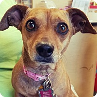 Adopt A Pet :: Sandy - North Las Vegas, NV