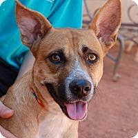 Adopt A Pet :: Rafiki - Las Vegas, NV