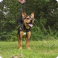 Adopt A Pet :: Goober - Arlington, TN