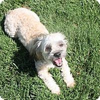 Adopt A Pet :: Rocky - Henderson, NV