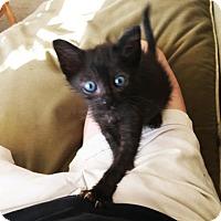 Adopt A Pet :: Archie - Austin, TX