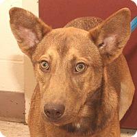Adopt A Pet :: Sylvester - McDonough, GA