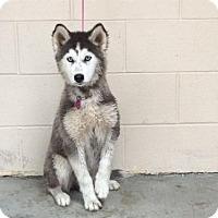 Adopt A Pet :: I1263655 - Pomona, CA