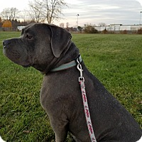 Adopt A Pet :: Memphis - Elyria, OH