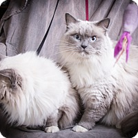 Adopt A Pet :: Casey and Lacey - Anna, IL