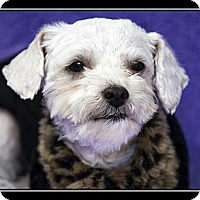 Adopt A Pet :: Anna - Fort Braff, CA
