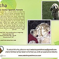 Adopt A Pet :: Mischa - Ottawa, ON