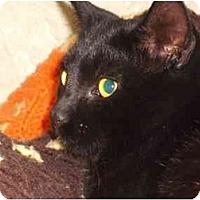 Adopt A Pet :: Scamp - Morris, PA