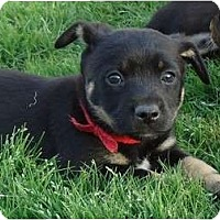 Adopt A Pet :: Jordan - Arlington, TX