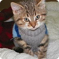 Adopt A Pet :: Kendrick - Dover, OH