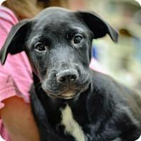 Adopt A Pet :: Sloan - Gainesville, FL