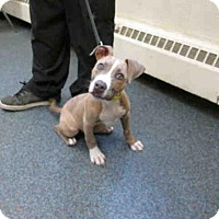 Adopt A Pet :: Rocky - Toledo, OH