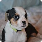 Adopt A Pet :: Basta