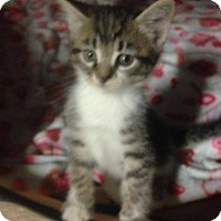 Adopt A Pet :: Rocky Road - Putnam, CT