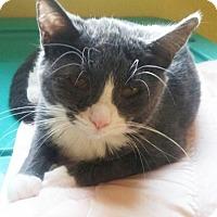 Adopt A Pet :: Peeps - Hudson, NY