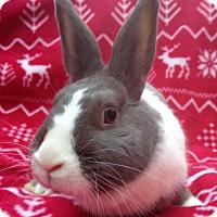 Adopt A Pet :: Seraphina - Watauga, TX