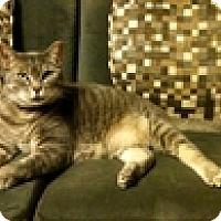 Adopt A Pet :: Daisie - Vancouver, BC