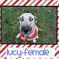 Adopt A Pet :: Lucy (Pom-do) - Windham, NH