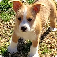 Adopt A Pet :: Chewy - Broken Arrow, OK