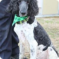 Adopt A Pet :: Jersey - Washington, DC
