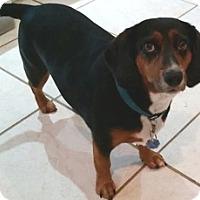 Adopt A Pet :: Candy - Richmond, VA