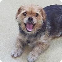 Adopt A Pet :: Dax - Miami, FL