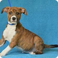 Adopt A Pet :: **TINY TIM** MEET JUNE 25TH! - Mukwonago, WI