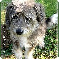 Adopt A Pet :: Scruffy - Marlborough, MA
