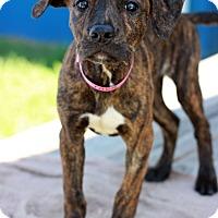 Adopt A Pet :: Tara - Waldorf, MD