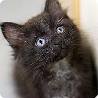 Adopt A Pet :: Freddy - Troy, MI
