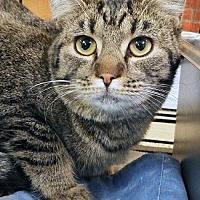 Adopt A Pet :: BOO - Toledo, OH